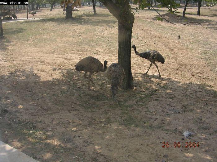 西安秦岭野生动物园 图片